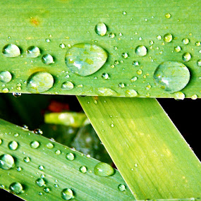 The Brightest Green by Sara Swanson - Nature Up Close Leaves & Grasses