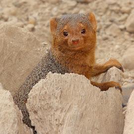 Hello ! by Gérard CHATENET - Animals Other Mammals