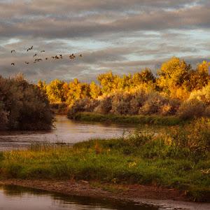 10 ls umt bighorn bend sunrise geese 1 100.jpg