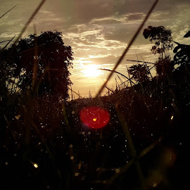sunset by Raman Deep - Nature Up Close Trees & Bushes ( abstract, nature, sunset, landscape, rain )