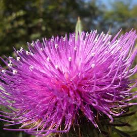 Цвете by Georgi Kolev - Flowers Single Flower ( небе., ден., светлина., цвете., цветове., дървета. )