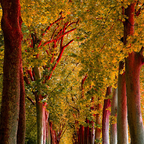 by Alain Labbe Alain - Nature Up Close Trees & Bushes (  )