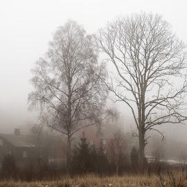 Soli Brug Norway by Dirk Rosin - Landscapes Prairies, Meadows & Fields