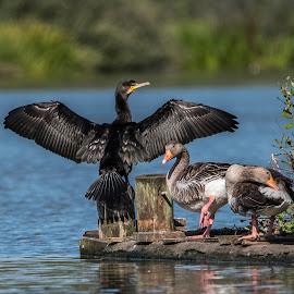 by Wily Mikalsen - Animals Birds