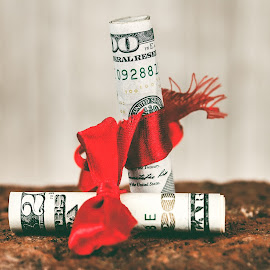 Fruits of the Money Tree by Rob Heber - Artistic Objects Other Objects ( greed, detail, gift, still life, brick, red ribbon, wood grain background, red brick, currency, ribbon, money, closeup, wood grain, spending, abstract, ideas, red bow, texture, temptation, gift wrapped, twenty dollar bill, close up, rough texture, paper money, cash, finance, bow, hundred dollar bill, conceptual )