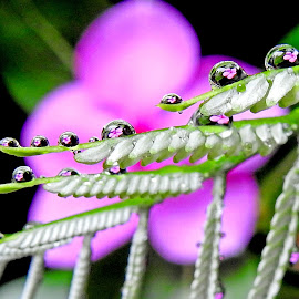 Reflection by Asif Bora - Nature Up Close Natural Waterdrops