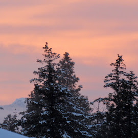 PINK MORNING by Cynthia Dodd - Novices Only Landscapes ( winter, sky, nature, colorful, trees, pink )