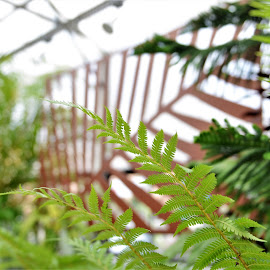 Fern Fun by Scot Gallion - Nature Up Close Trees & Bushes (  )