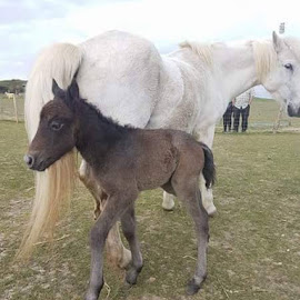 mother and foal by Stephanie Betts - Animals Horses