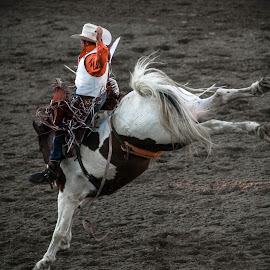 Rodeo by Tyson Page - Sports & Fitness Rodeo/Bull Riding ( spanish fork rodeo, utah, saddle, horse, fiesta days rodeo )