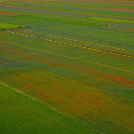 Castelluccio 15 by Bruno Brunetti - Landscapes Prairies, Meadows & Fields ( nature, flowers, italy, castelluccio, fields,  )
