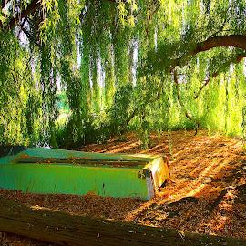 Boat under tree by Gaylord Mink - Transportation Boats ( tree, leaves, sunlight, boat )