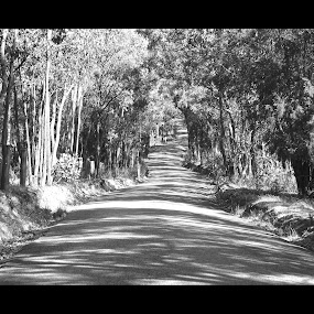 Light & Shadows by Sassine El Nabbout - Landscapes Forests ( australia, victoria, black and white, b and w, landscape, b&w, monotone, mono-tone )