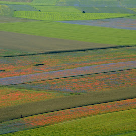Castelluccio 19 by Bruno Brunetti - Landscapes Prairies, Meadows & Fields ( nature, colors, flowers, italy, castelluccio,  )