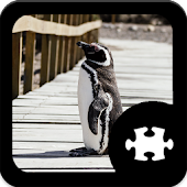 Game Penguin puzzle apk for kindle fire