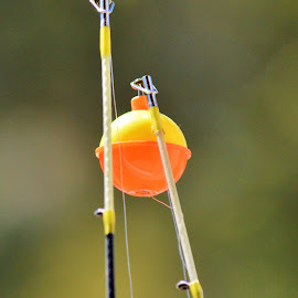 Been Fishing by Jim Sloan - Novices Only Objects & Still Life ( rod, simple, still life, fishing, float )
