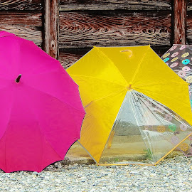 Three Umbrella by Richard Michael Lingo - Artistic Objects Still Life ( japan, still life, umbrella, artistic objects, rain )