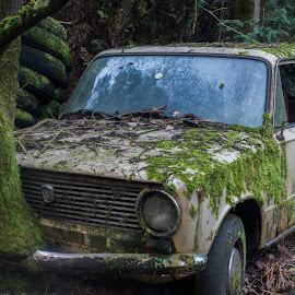 Abandond car by Kim Mesorten - Transportation Automobiles ( car, tree, abandoned )