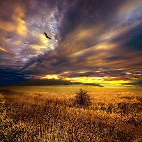 Wings and Prayers by Phil Koch - Landscapes Prairies, Meadows & Fields