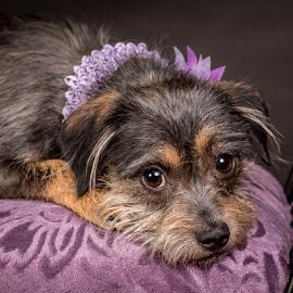 by Myra Brizendine Wilson - Animals - Dogs Portraits ( canine, foster dog, dogs, foster nadine, pet, pets, nadine, gcspca, dog, foster dog nadine, greater charlotte spca,  )