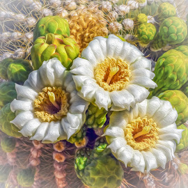 Saguaro Flowers by Dawn Hoehn Hagler - Digital Art Things ( saguaro flowers, flowers, saguaro, cactus, photoshop, oil paint, digital art )