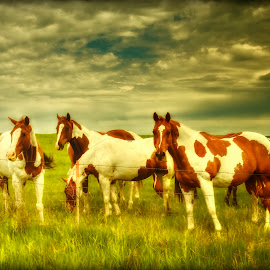 Gathering by Michele Richter - Animals Horses