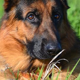 by Sandy Terry-Jones - Animals - Dogs Portraits