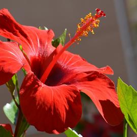 by Albina Jasinskaite - Flowers Flower Gardens