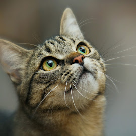 pretty luna by Almasa Dalan - Animals - Cats Portraits