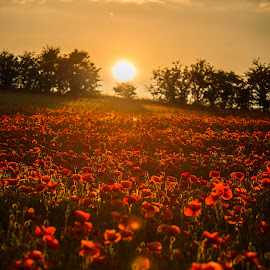 At thier Best by Peter Rollings - Landscapes Prairies, Meadows & Fields