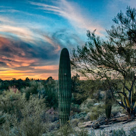 Tucson, Sunset by Charlie Alolkoy - Landscapes Deserts ( sky, sunset, arizona, tucson, sunrise, cactus )