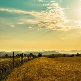 wheat fence sun by Bob Applegate - Landscapes Prairies, Meadows & Fields ( field, farm, wheat, fence, cloud )