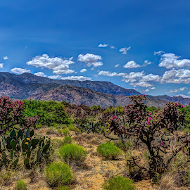 Desert Bloom by Jim Moon - Landscapes Deserts ( mountains, desert, whisper river photography, desert cactus flowers, arizona, bloom, jim moon, flowers, cactus, mount graham )
