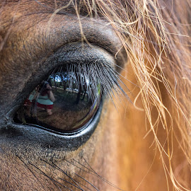 horse eye by Jenn Moss - Animals Horses ( macro, equine, horse, eye )