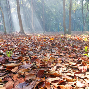 by Taufiq Hidayat - Nature Up Close Leaves & Grasses ( fall leaves on ground, fall leaves )