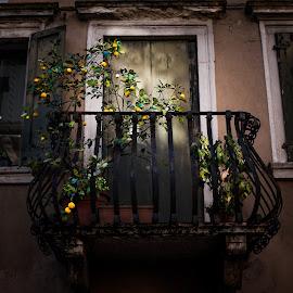 Balcony with lemons by Plamen Mirchev - City,  Street & Park  Neighborhoods ( door, lemon, color, lemon tree, street, old, tree, italian, old town, windows, balcony, lemons )