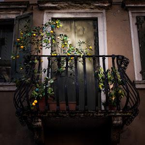 2018.09.14_Balcony with lemons-.JPG