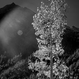 Alone in the woods by Akashneel Banerjee - Black & White Flowers & Plants ( mountain, himalaya, tree, nature up close, sun, golden )