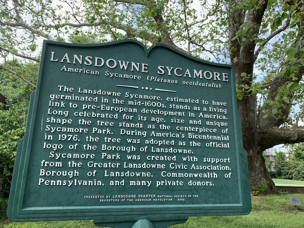 The Lansdowne sycamore is estimated to have germinated in the mid-1600s and is a link to the pre-Colonial history of the area. The sycamore is the symbol of Lansdowne, Pennsylvania.