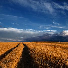 Untitled by Zsolt Zsigmond - Landscapes Prairies, Meadows & Fields ( clouds, field, wheat, sky, blue, path, gold )