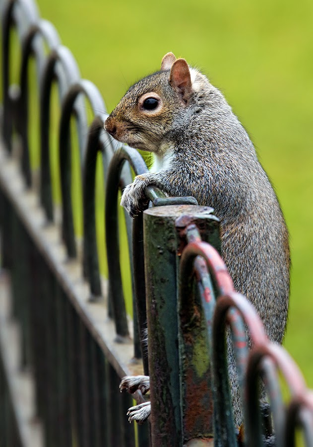 Spectator by Anthony D'Angio - Animals Other Mammals