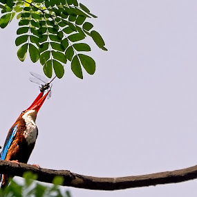 A Catch... by Sutapa Karmakar - Animals Birds