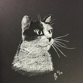 Cat by Anika McFarland - Drawing All Drawing ( cat, black and white, spotted cat, portrait, animal,  )