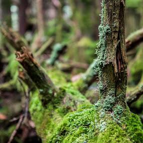 Tree by Sabastian L - Nature Up Close Trees & Bushes ( mountain, tree, moss, north carolina )