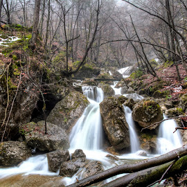 Wild waterfalls near my home by Rado Krasnik - Landscapes Forests ( water, waterfalls, trees, forest, landscape )