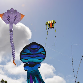 sky trio by Rachel Rachel - Artistic Objects Other Objects ( clouds, sky, blue, kites,  )