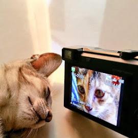 Myself by Peter Art - Animals - Cats Kittens