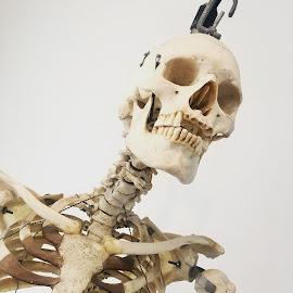 Skeleton  by Angela Taya - Novices Only Objects & Still Life