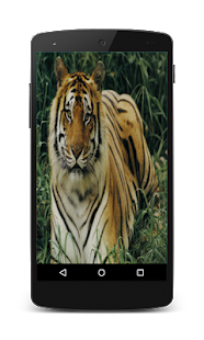 Tiger Live Wallpaper - screenshot