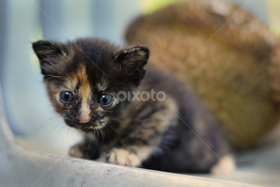 Scared by Zamri Ahmad - Animals - Cats Kittens ( cats, kittens, scared kittens, new born kittens, cute kittens )